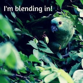 Im blending in!